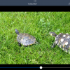 ownCloud iOS App iPad video